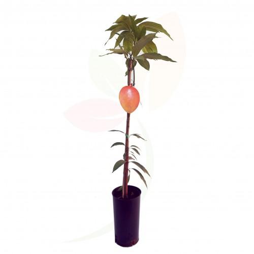 mango bolsa